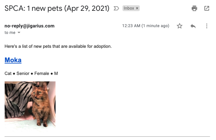 An email message containing a picture of a senior cat